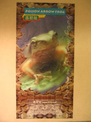 香港爬虫协会-新世界中心亚玛逊内动物海报的错误