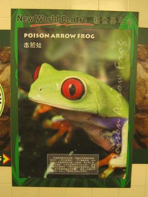 香港爬虫协会 - 新世界中心亚玛逊内动物海报的错误